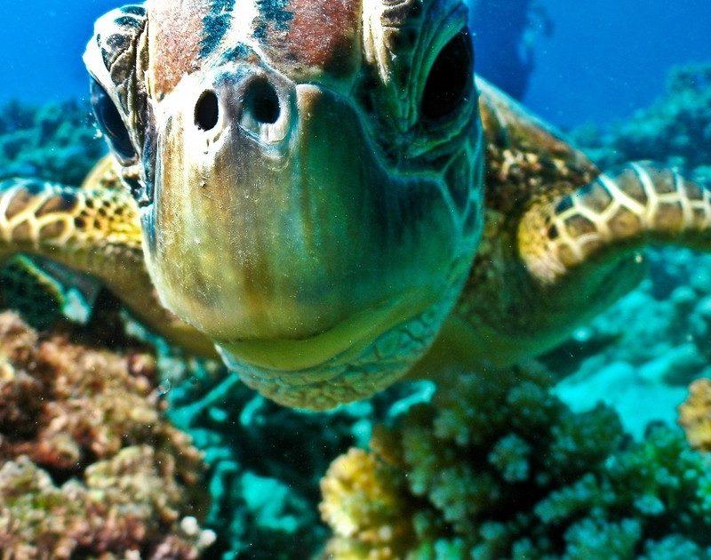 Tortuga Isla Giftun-www.visitasguiadasegipto.com