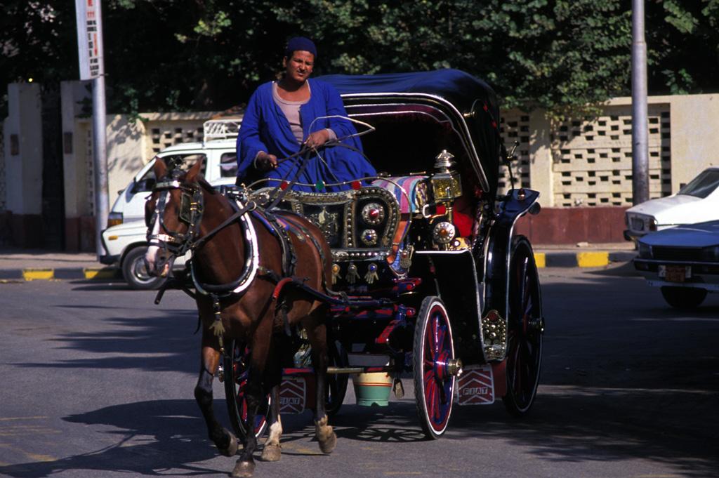 Paseo en Calesa Luxor-www.visitasguiadasegipto.com