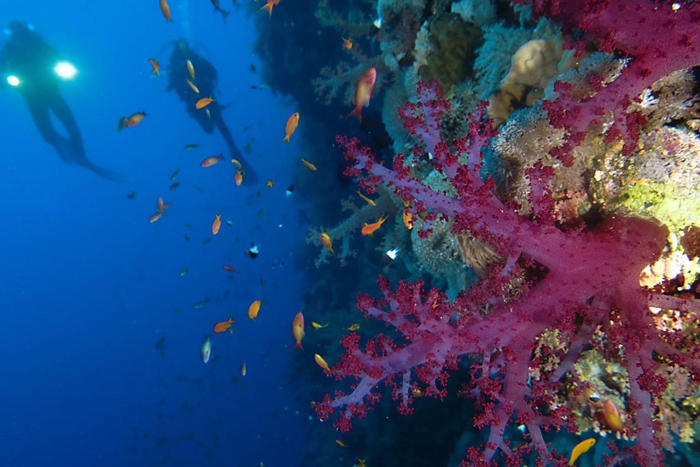 Vistas Buceando-www.visitasguiadasegipto.com