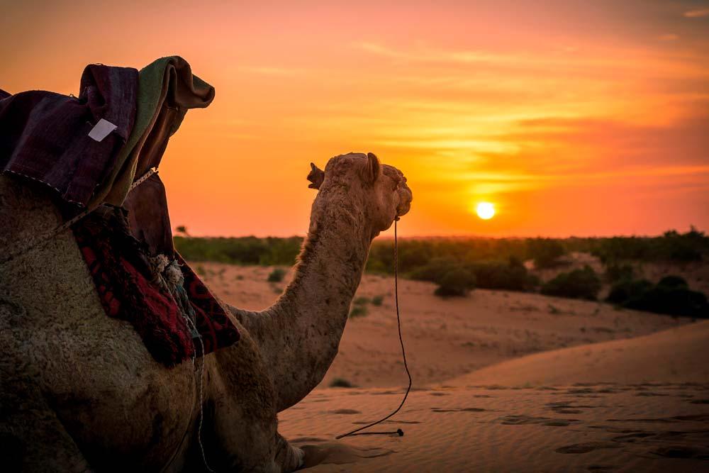 Atardecer en Camello-www.visitasguiadasegipto.com