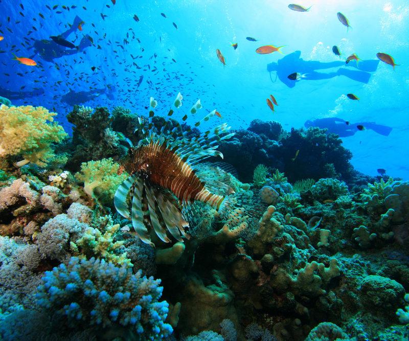 Vista fondo del Mar-www.visitasguiadasegipto.com